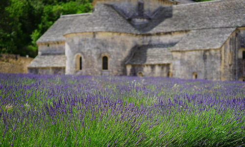 provence-lavender-abbey-rr-vacations-blog