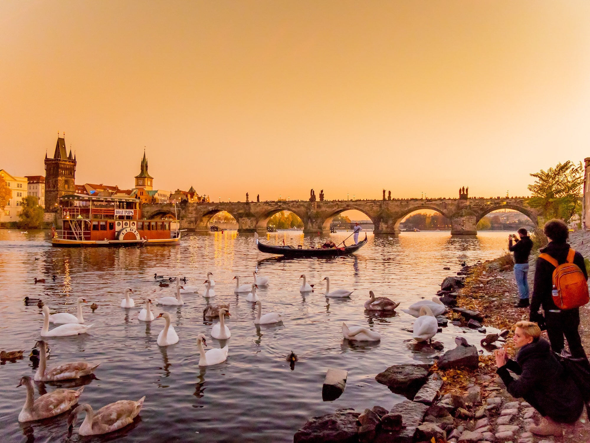 Sunset at the Charles Bridge in Prague, with swans swimming in the river